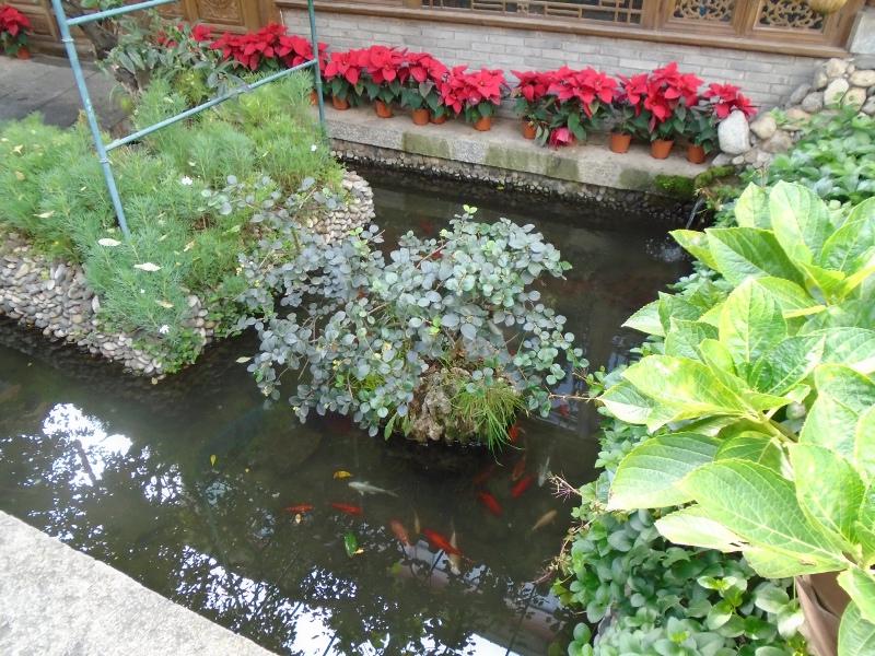 Koi pond at the Landscape Hotel.